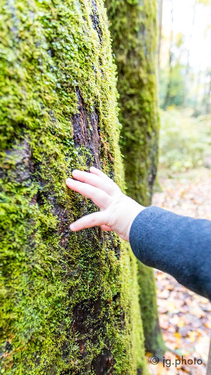 Finn touching moss