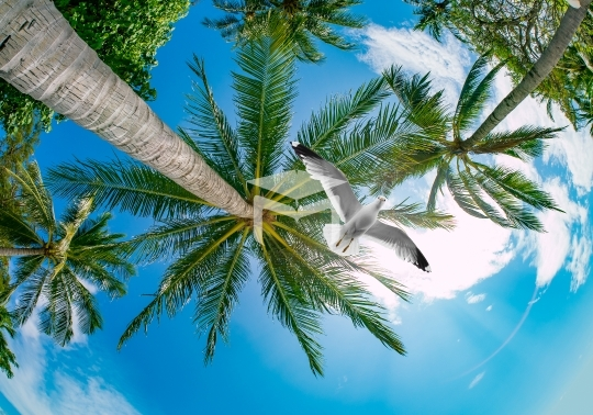 3d sky clouds and palm