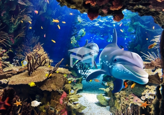 underwater sea dolphin aquarium