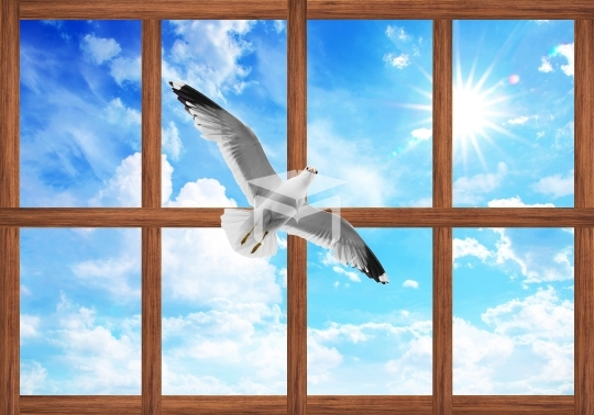 3d wood ceiling sky and seagulls