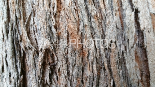 Bark of tropical tree, texture
