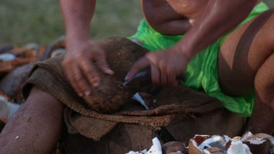 Heiva Tahiti, Polynesian Traditional sports, man emptying coconuts with a tool, coprah- farmers contest