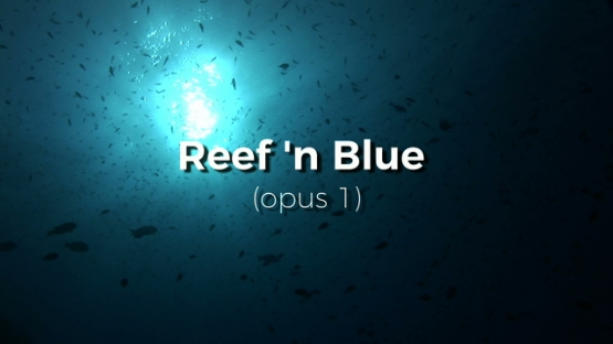 Edited Video, Reef n Blue Opus 1, Tropical fishes of the coral reef of Manihi