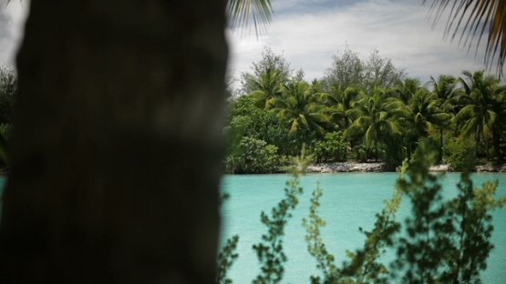 Bora Bora, by the lagoon with coconut trees