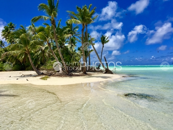Tetiaroa, Palm trees at the white sand beach of Tahuna Rahi