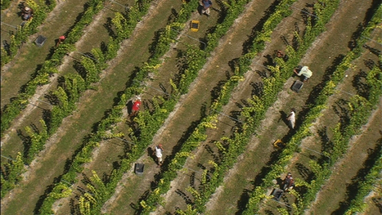 Rangiroa, farmers and vineyard on the motu