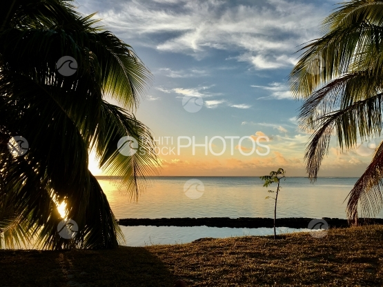 Moorea, sunset on the lagoon behind the coconut trees