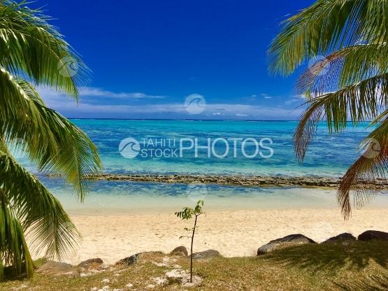 Moorea, seashore and white sand beach near the lagoon
