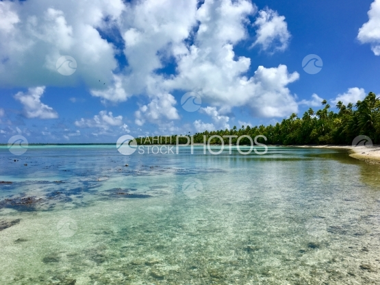 Lagoon of Tetiaroa, white sand beach and coconut trees