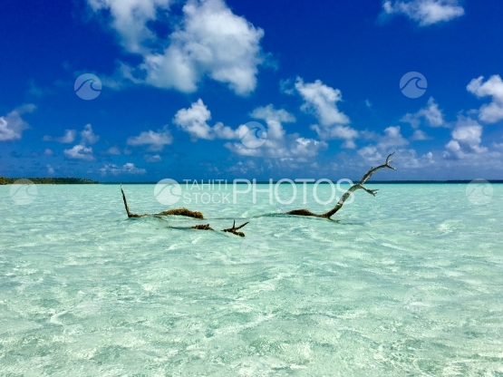 Dead tree in the lagoon of Tetiaroa