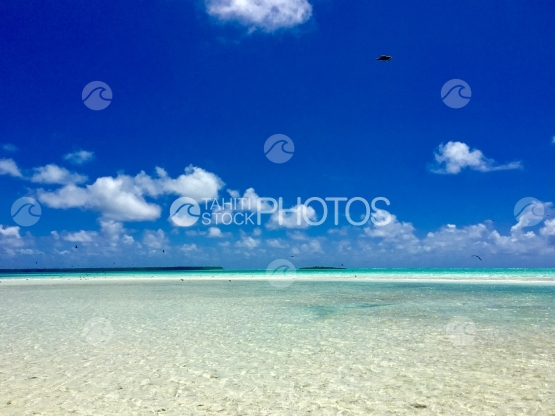 Birds flying over the Turquoise water of the lagoon of Tetiaroa