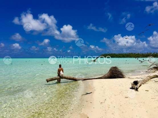 Young lady sitting on a dead palm in the lagoon of Tetiaroa