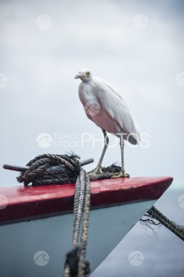 Egret at the front of a red boat