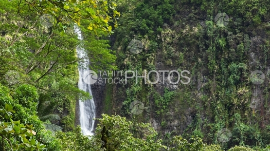 Tahiti, waterfall in middle of vegetation