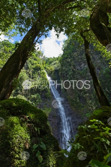 Tahiti, waterfall seen between trees