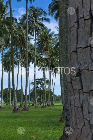 Tahiti, Coconutnut grove