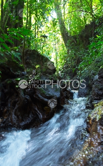 Tahiti, waterfall in the forest