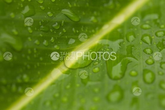 Drops of rain on tropical leaf