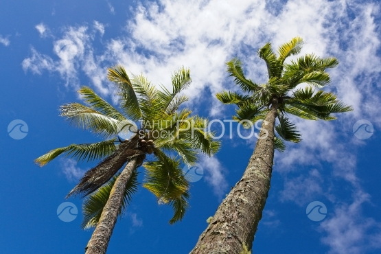 Polynesia, coconut tree and wind shot from above
