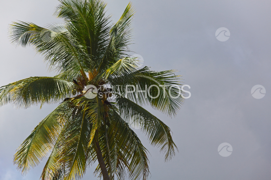 Coconut tree and cloudy sky