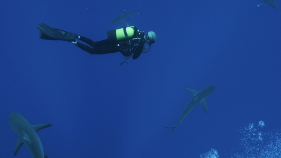 Scuba diver watching grey sharks in the depth, Tiputa pass, Rangiroa, 4K UHD