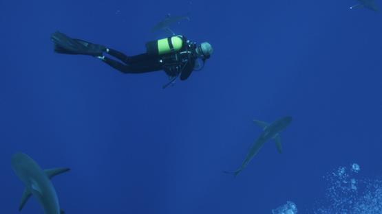 Scuba diver watching grey sharks in the depth, Tiputa pass, Rangiroa, 4K UHD