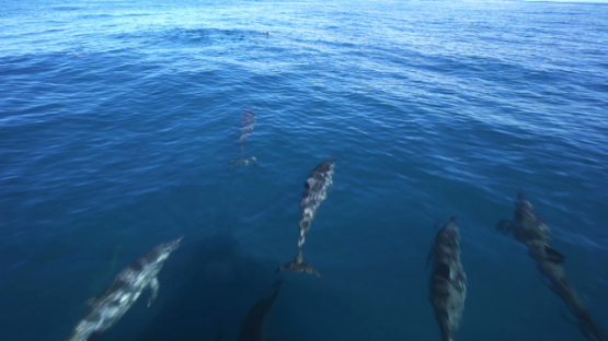 Spinner dolphins swimming at the front of a boat, Tahiti, 4K UHD