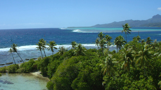 Raiatea, aerial view of the pass of Uturoa and coconut trees on ilet