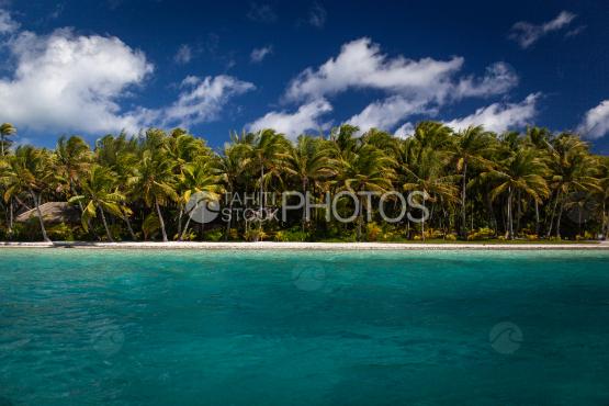Bora Bora, Coconut trees on the island bordering the lagoon under cloudy sky