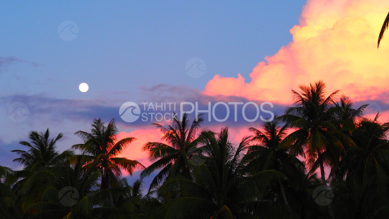 Full moon over the coconut trees at the sunset