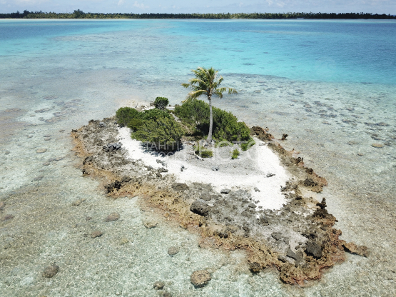 Fakarava, aerial shot of the lagoon and small island