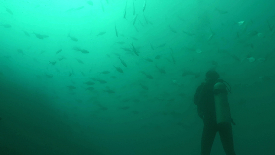 Hiva Oa, scuba diver observing a school of Trevally jack fishes evolving near the rock Hanakee