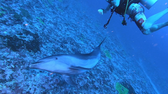 Rangiroa, two bottle nose dolphins swimming close to camera