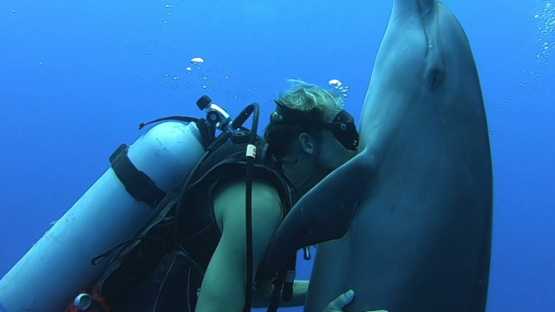 Rangiroa, scuba diver kissing the belly of a bottle nose dolphin