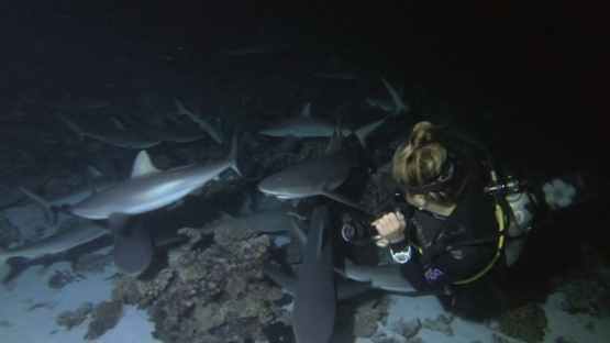 Fakarava, scuba diver woman surrounding by hundred of grey sharks at night over the reef