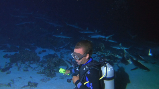 Fakarava, scuba diver and hundred of grey sharks at night over the reef