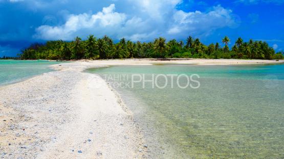 Coconut tree of Rangiroa reef island and wild sand beach, Tuamotu