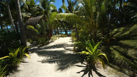 Bora Bora, traveling under the coconut trees by the lagoon
