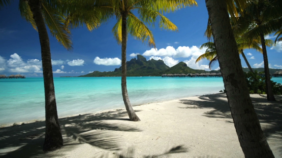 Bora Bora, traveling under the coconut trees by the lagoon