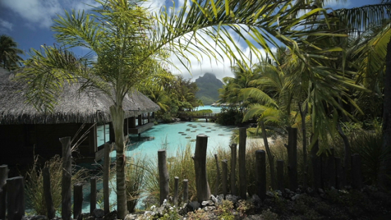 Bora Bora, slow motion traveling in the nature towards the lagoon and luxury overwater bungalow