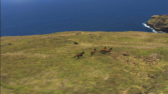 Aerial view over the desert land, and herd of wild horses running away, Nuku HIva