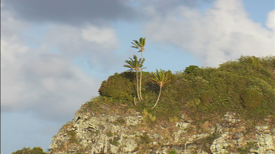 Maupiti, Leeward islands, aerial view of coconut trees on otp of the mountain