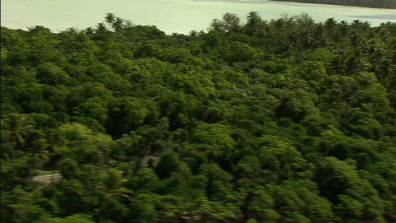 Aerial view of the coconut grove and pandanus of Maiao, by the lagoon, windward islands