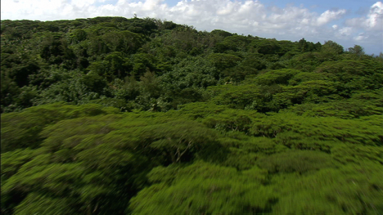 Maiao, aerial view over the hill and forest, windward islands