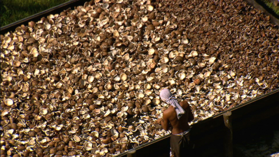 Maiao, aerial view of a coprah farmer working and drying nuts, windward islands