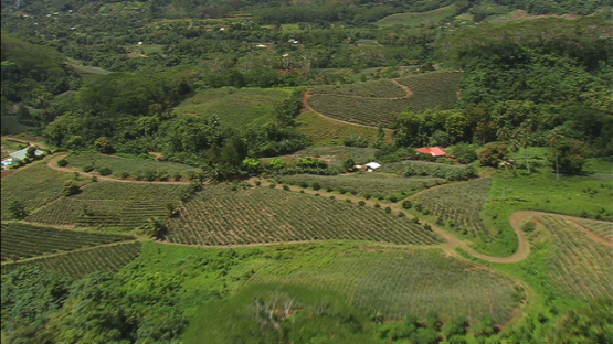 Moorea aerial view, pineapple fields by the Cook s Bay, windward islands