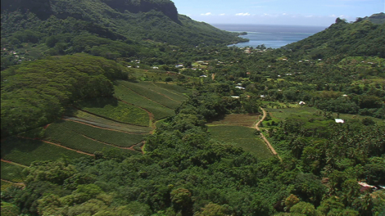 Moorea aerial view, pineapple fields by the mount Rotui, windward islands