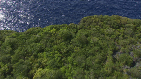 Makatea, vertical aerial view of the forest and reef, Tuamotu islands