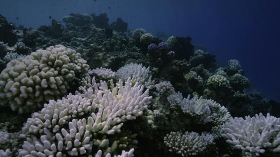 Rangiroa, Coral reef bleaching, 6K