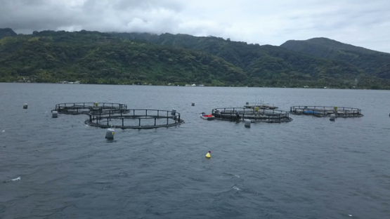 Tahiti aerial drone video, fish farming in the lagoon, french polynesia